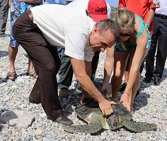 Tedavi edilen kaplumbağa tekrar denizde