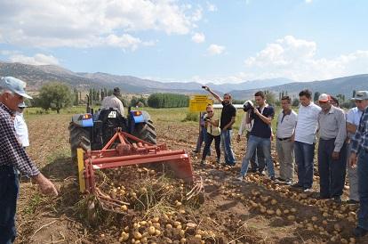 Patateste rekor üretim