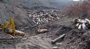Yatağan Orman İşletme'den 4 milyon TL