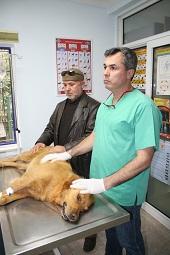Caniler kedi ve köpekleri katletti