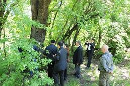 Çinliler Sığla ağaçlarını inceledi