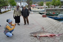Yavru Köpekbalığı ilgi odağı oldu