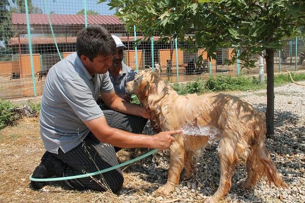 Köpeklere önce dondurma sonra duş