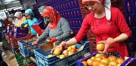 Krize rağmen en fazla ihracat Rusya'ya