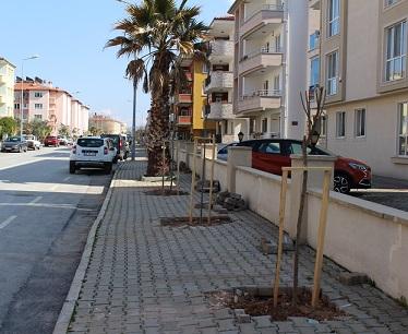 Menteşe kaldırımları ağaçlandırılıyor