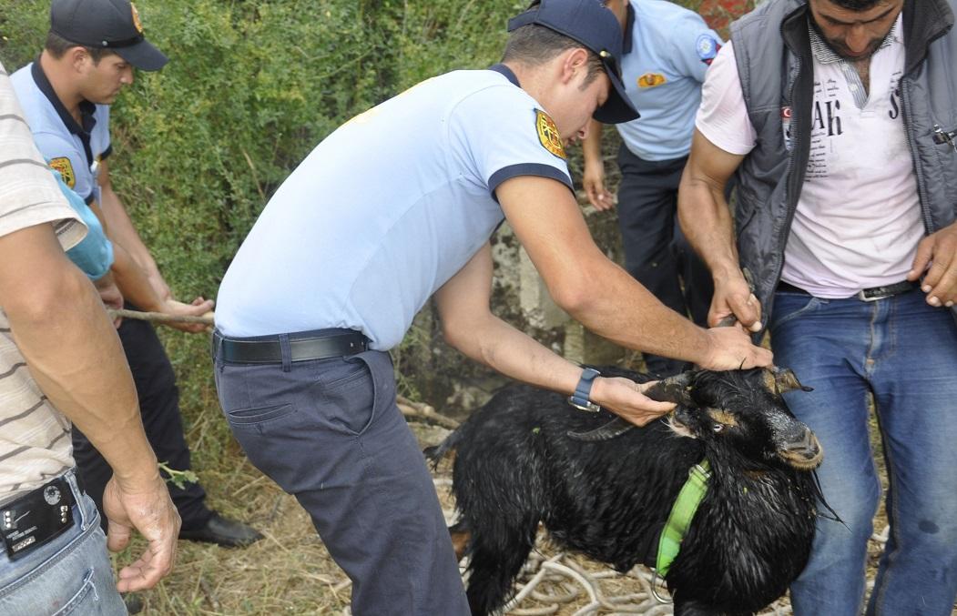 Alev Savaşçıları keçiyi kurtardı