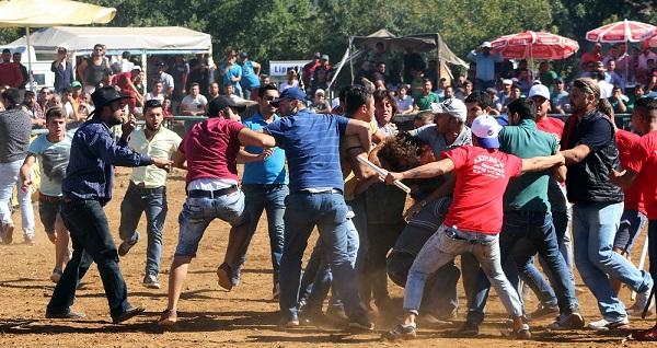 Boğalar güreşti, sahipleri kavga etti