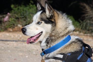Kayıp köpek için bütün Bodrum'u dolaştı