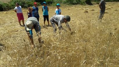 Yerel Tohum korunuyor ve üretiliyor
