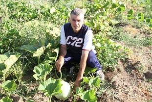 İlk yerel tohum hasadı yapıldı