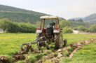 Menteşe'de yerel tohumlar toprakla buluştu