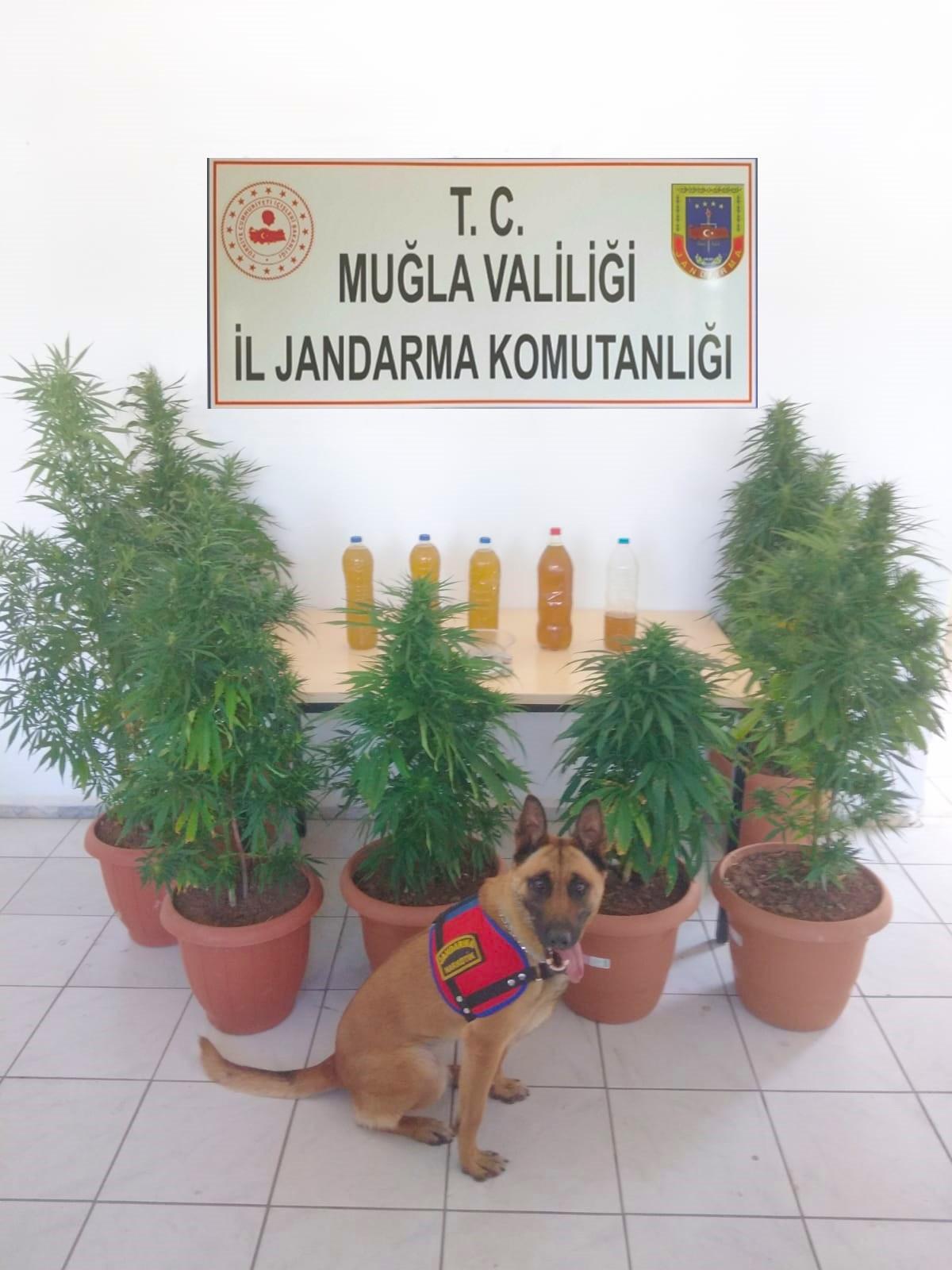 Seydikemer'de uyuşturucu operasyonu