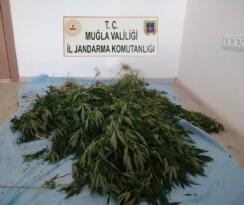 Menteşe'de uyuşturucu operasyonu