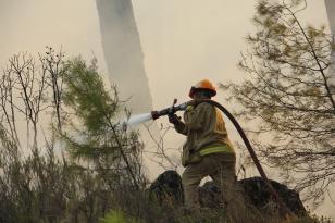 328 orman yangını meydana geldi