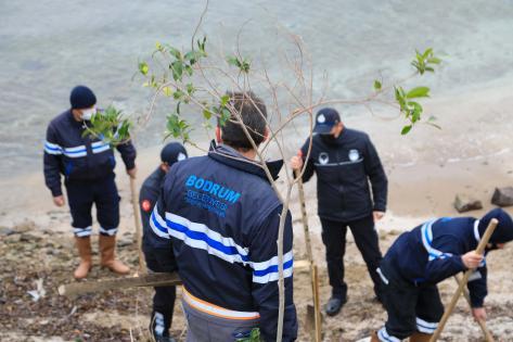 Bodrum'da ağaçlandırma çalışması gerçekleştiriliyor