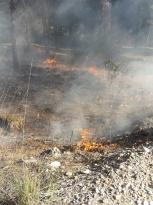 Muğla'da ormanlık alanda çıkan yangın söndürüldü