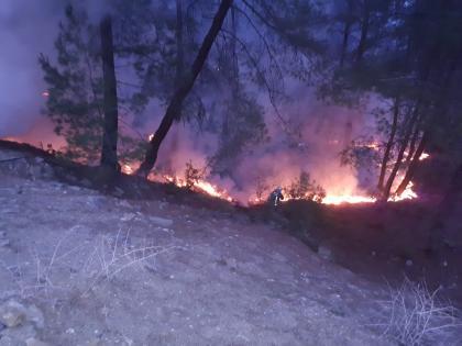 orman yangını büyümeden söndürüldü