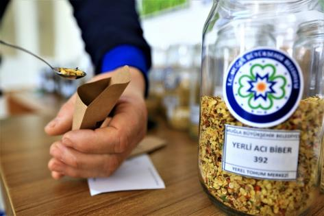 Muğla'dan domates ve biber yerel tohumu Türkiye'ye dağıldı