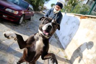 """Bodrumlu avukat sokak hayvanları için """"iyilik mesaisi"""" yapıyor"""