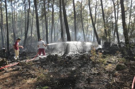 Ortaca'da ormanlık alan zarar gördü