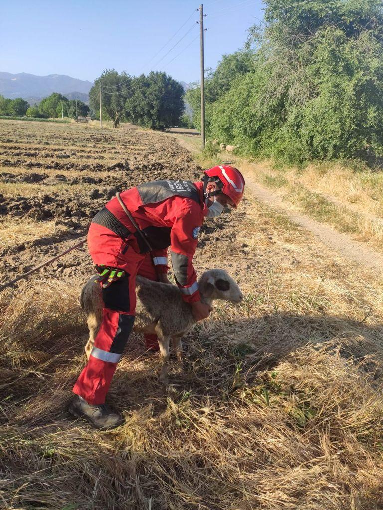 kuyuya düşen koyun itfaiye ekiplerince kurtarıldı