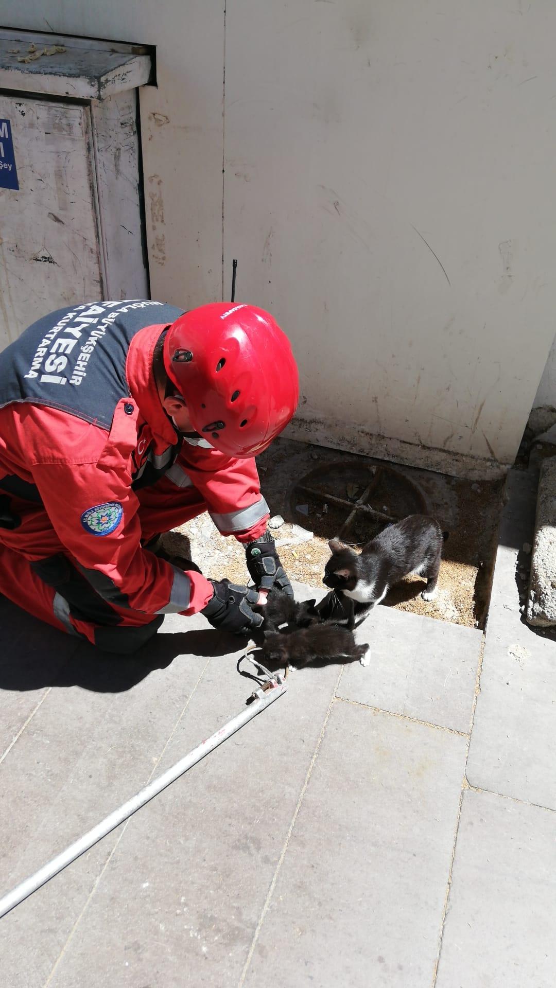 duvar kaplamasına sıkışan kedi yavruları kurtarıldı