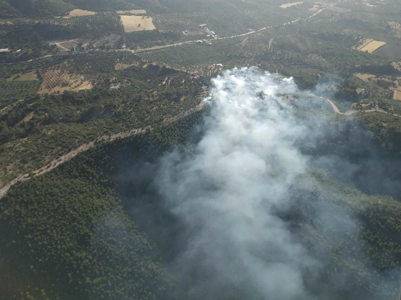 Muğla'nın Bodrum ilçesinde orman yangını çıktı
