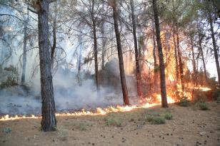 Milas'taki yangını söndürme çalışmaları devam ediyor